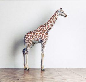 Girafferesized